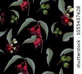 australia gum nut and red... | Shutterstock . vector #1055437628