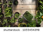 young tomatoes  parsley  chives ... | Shutterstock . vector #1055454398