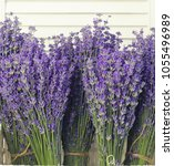 lavender flowers in closeup.... | Shutterstock . vector #1055496989