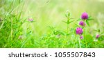 nature summer background with... | Shutterstock . vector #1055507843