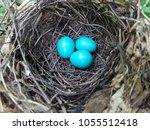 Robins Nest Eggs Spring Time