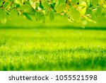 background of a fresh spring... | Shutterstock . vector #1055521598