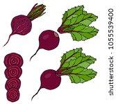 set of beet   beetroot with top ... | Shutterstock .eps vector #1055539400