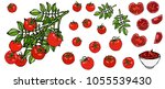 bunch of cherry tomatoes on a... | Shutterstock .eps vector #1055539430