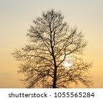 silhouette of tree on sunset....   Shutterstock . vector #1055565284