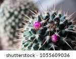 Macro Photo Of Cactus Flower