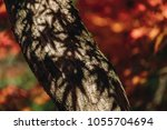 close up of red maple tree with ... | Shutterstock . vector #1055704694