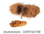 red palm weevil  rhynchophorus... | Shutterstock . vector #1055761748