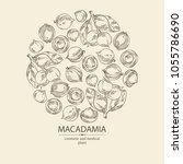 background with macadamia ... | Shutterstock .eps vector #1055786690