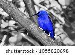 pretty blue bird on a wooden...   Shutterstock . vector #1055820698