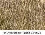 The Texture Of The Ash Tree...
