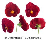 Pansy Flower From Different...
