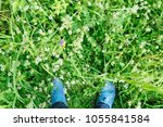 top view on the green flower... | Shutterstock . vector #1055841584