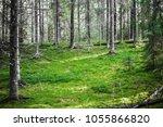 clear wild forest summer...   Shutterstock . vector #1055866820