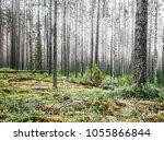 beautiful wild forest. summer...   Shutterstock . vector #1055866844
