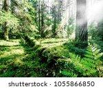 summer forest jungle. plants...   Shutterstock . vector #1055866850