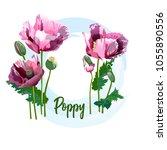 spring flower   a poppy for...   Shutterstock .eps vector #1055890556
