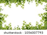 tree leaf frame on white... | Shutterstock . vector #1056007793