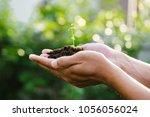 trees growing seedlings in... | Shutterstock . vector #1056056024