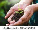 trees growing seedlings in... | Shutterstock . vector #1056056030