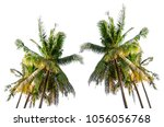 coconut palm tree isolated | Shutterstock . vector #1056056768