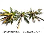 coconut palm tree isolated | Shutterstock . vector #1056056774