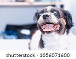 happy cute dog. | Shutterstock . vector #1056071600