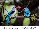 woodland kingfisher bird couple ... | Shutterstock . vector #1056075299