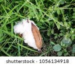 kapok  ceiba pentandra or white ... | Shutterstock . vector #1056134918