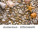 Seashells, starfish and sea pebbles background. Natural seashore stones textured surface, top view