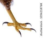 Talon of the Bird of Prey isolated on white.