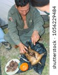 Small photo of July 2007, Gobi, Mongolia, shepherd cooks marmot with hot stones