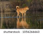 rabies stray dog deceased in ... | Shutterstock . vector #1056266663