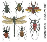 vector set of various insects... | Shutterstock .eps vector #1056291509