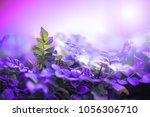 nature. green plants closeup.... | Shutterstock . vector #1056306710
