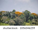 lush tropical jungle along the... | Shutterstock . vector #1056346259