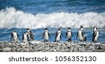 panorama of penguins in a row ... | Shutterstock . vector #1056352130