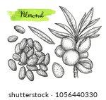 ink sketch of almond. hand... | Shutterstock .eps vector #1056440330