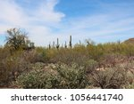 Small photo of Desert landscape filled with saguaro cacti, creosote bushes, prickly pear cacti, teddybear cholla cacti on the Desert Discovery Nature Trail in Saguaro National Park, Tuscon Mountain District, Arizona