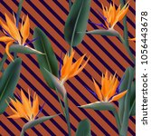 bird of paradise tropical... | Shutterstock .eps vector #1056443678