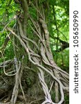 Twisted Tropical Tree Roots In...