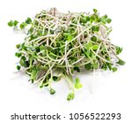 young sprout microgreen... | Shutterstock . vector #1056522293