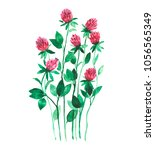 watercolor red clover isolated... | Shutterstock . vector #1056565349