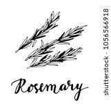 rosemary sketch style vector... | Shutterstock .eps vector #1056566918