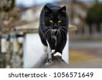 Stock photo black cat outdoors 1056571649