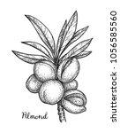 ink sketch of almond. hand... | Shutterstock .eps vector #1056585560