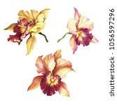 Set Of Orchids. Hand Draw...