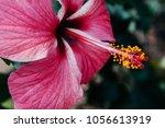 beautiful vertical shot of pink ... | Shutterstock . vector #1056613919