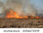 Forest Fire  Burning Grass And...