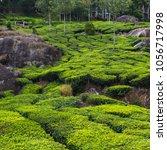 tea plantations in kerala | Shutterstock . vector #1056717998